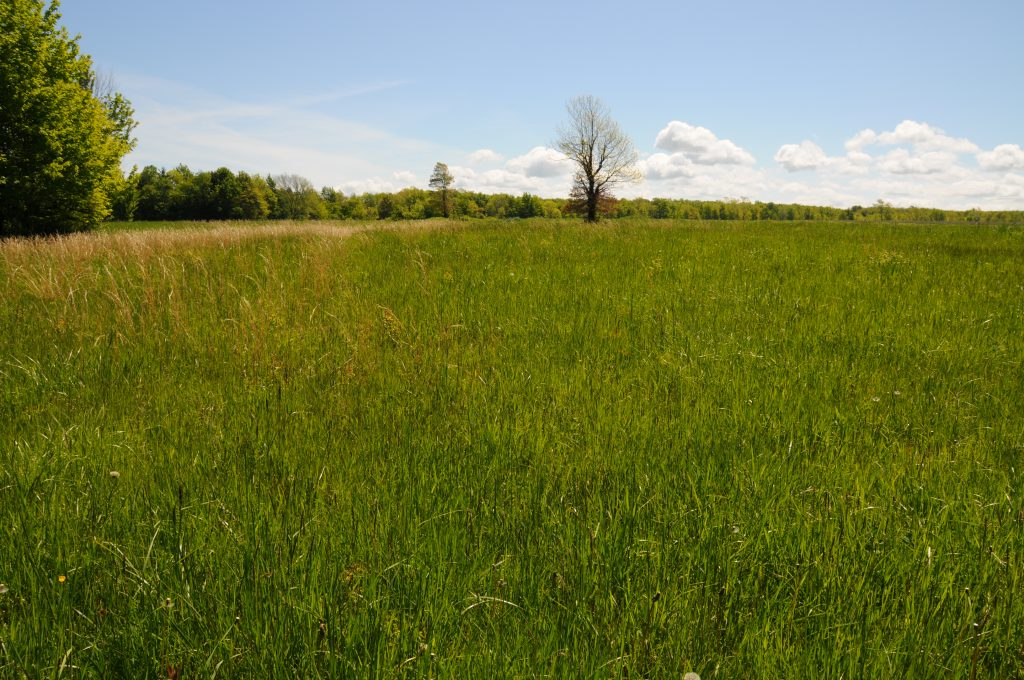 A grassy field with a few trees in the background
